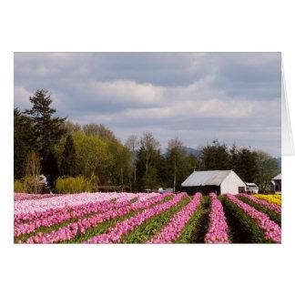 Campo rosado del tulipán felicitacion