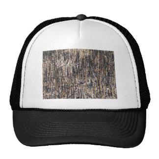 Campo seco de las cañas gorras