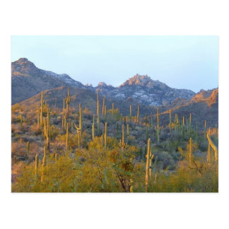 Campo Sunlit del Saguaro Postales