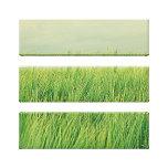 Campo verde impresiones de lienzo