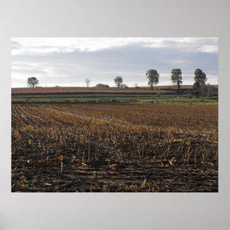 Campo y árboles, DSCF7005 Póster