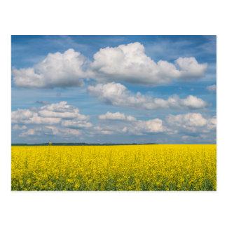 Campo y nubes de Canola Tarjetas Postales