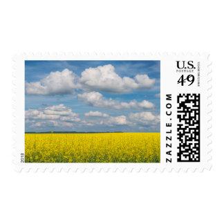 Campo y nubes de Canola Timbres Postales