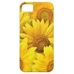 Campos amarillos del girasol iPhone 5 Case-Mate cárcasas