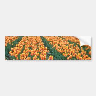 Campos anaranjados del tulipán, flores de Holanda Pegatina De Parachoque