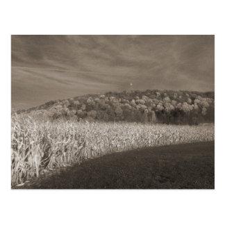 Campos blancos y negros del grano postal