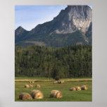 Campos con el heno afianzado, Alberta, Canadá Impresiones