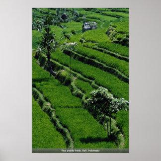 Campos de arroz de arroz, Bali, Indonesia Póster