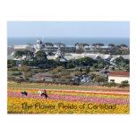 Campos de flor de la postal de Carlsbad