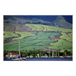 Campos de la caña de azúcar - Lahaina, Maui Posters