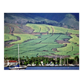 Campos de la caña de azúcar - Lahaina, Maui Postal
