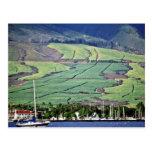 Campos de la caña de azúcar - Lahaina, Maui Tarjetas Postales