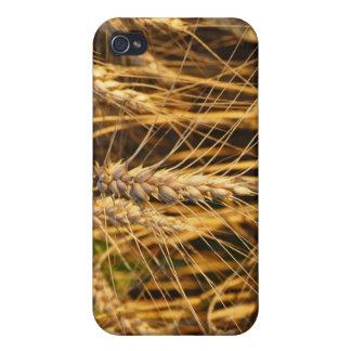 Campos de los oídos del trigo de la foto de la nat iPhone 4 fundas