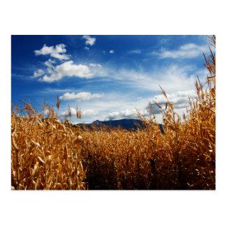 Campos de maíz de la caída tarjetas postales