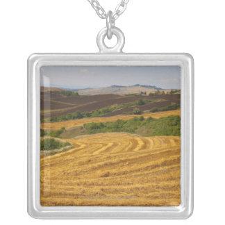 Campos de trigo después de la cosecha colgante cuadrado