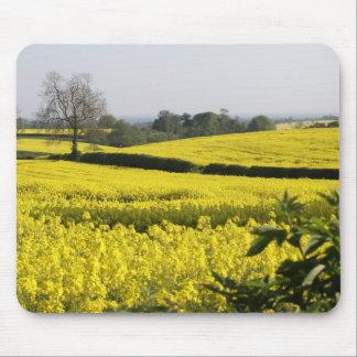 Campos del amarillo (2) alfombrillas de raton
