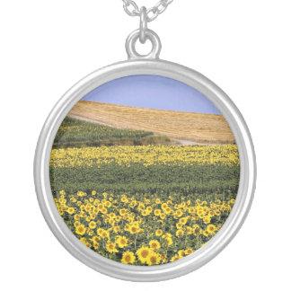 Campos del girasol, flores de Toscana, Italia Colgante Redondo