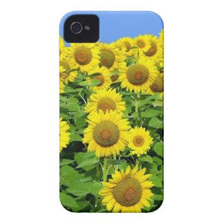 Campos del girasol iPhone 4 coberturas