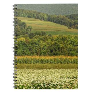 Campos del grano libreta