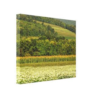Campos del grano impresión en lienzo