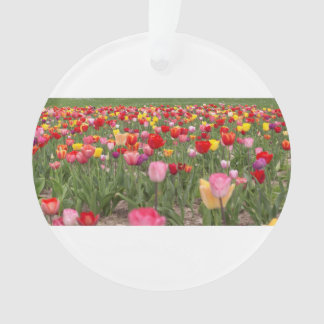 Campos del tulipán