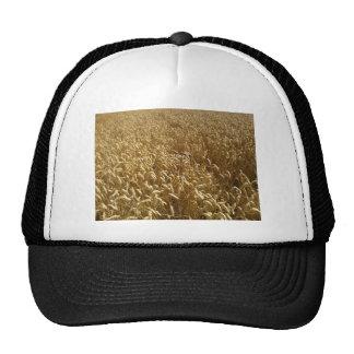 campos del verano gorros bordados