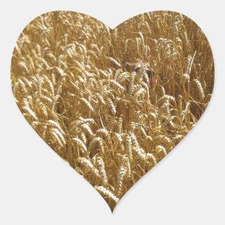 campos del verano pegatina en forma de corazón