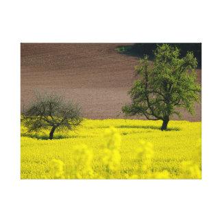 campos florecientes de colza con Pforzheim Lona Envuelta Para Galerias