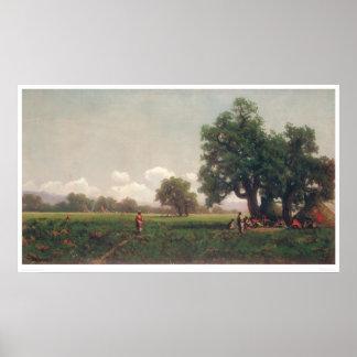 Campos indios (0716A) Póster