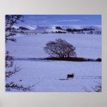 Campos nevados que contienen ovejas con impresiones