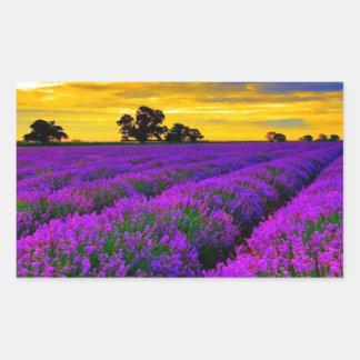 Campos púrpuras pegatina rectangular