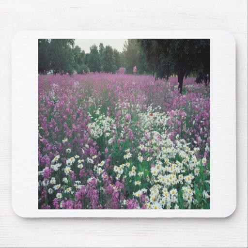 Campos púrpuras tapete de ratones