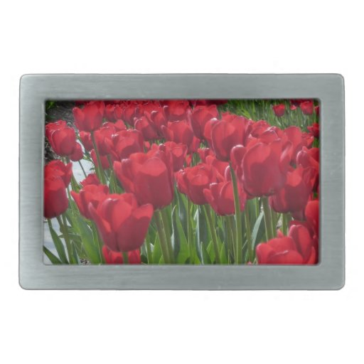 Campos rojos del tulipán hebilla de cinturon rectangular
