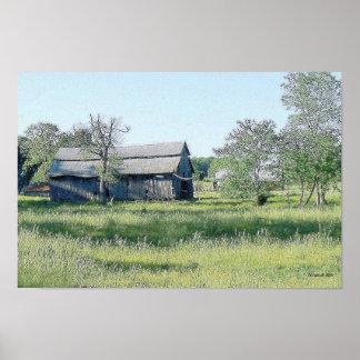 Campos verdes del verano póster