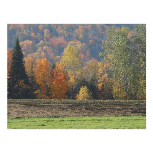 Campos y Adirondacks del otoño de las montañas Tarjeta Postal
