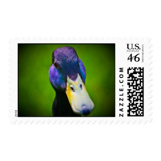 Camra curious....... postage stamps