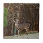 Camuflaje del roble de los ciervos del macho/del d azulejo