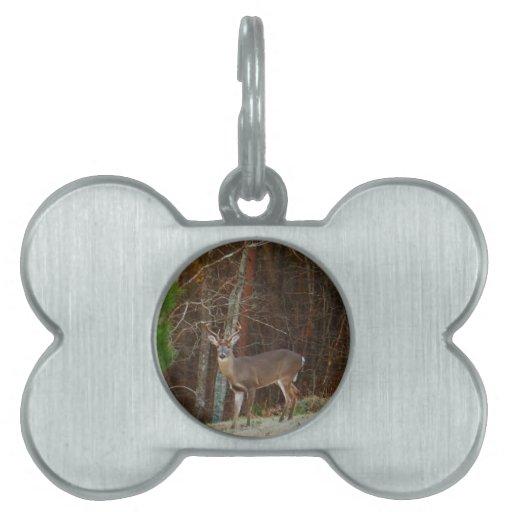 Camuflaje del roble de los ciervos del macho/del d placas de mascota