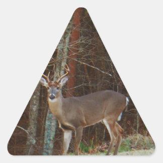 Camuflaje del roble de los ciervos del macho del d calcomanía trianguladas personalizadas