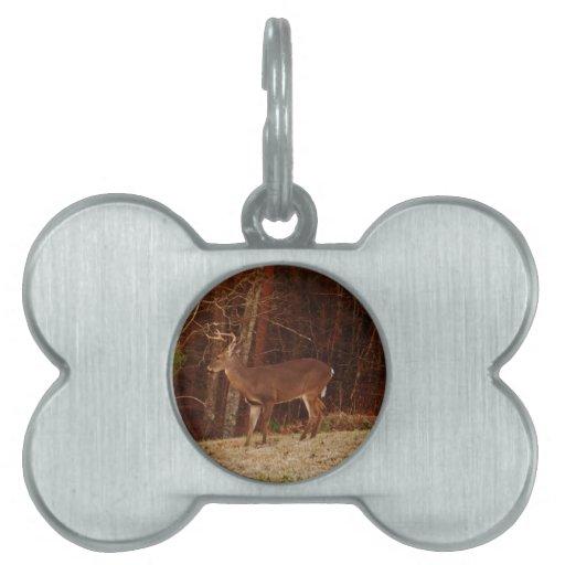 Camuflaje del roble rojo de los ciervos del macho/ placa de mascota