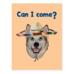 Can I Come Dog Postcard