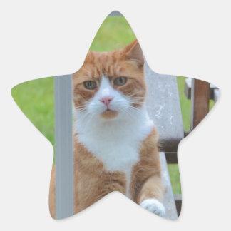 Can I Come In Pumpkin. Star Sticker