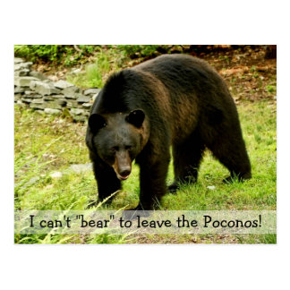 Can t Bear to Leave Poconos Postcard
