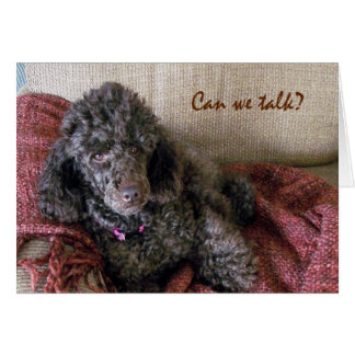 Can We Talk? Cute Brown Poodle and Blanket Card