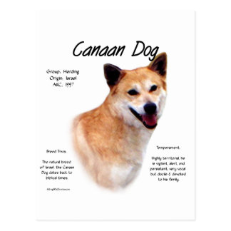 Canaan Dog History Design Post Card