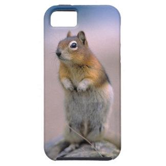 Canada, Alberta, Banff NP. A Golden-mantle iPhone 5 Case