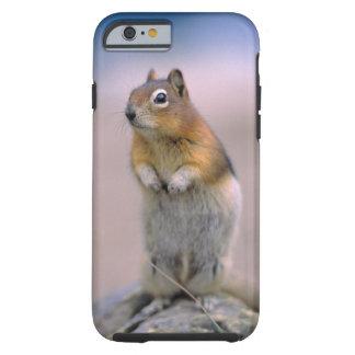 Canada, Alberta, Banff NP. A Golden-mantle Tough iPhone 6 Case