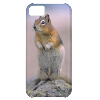 Canada, Alberta, Banff NP. A Golden-mantle iPhone 5C Covers