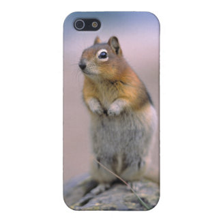 Canada, Alberta, Banff NP. A Golden-mantle iPhone 5/5S Cases