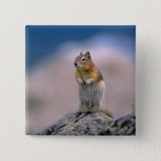 Canada, Alberta, Banff NP. A Golden-mantle Pinback Button